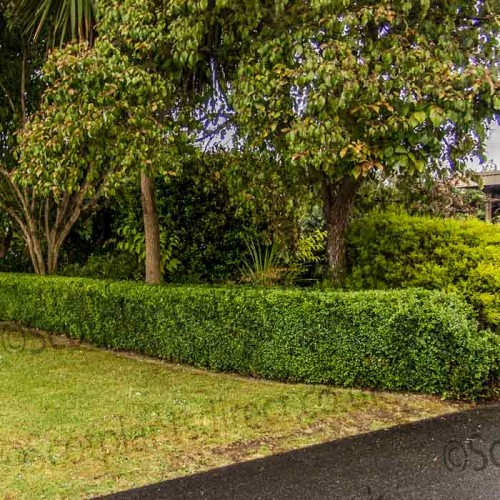 Buxus Granulated Fertiliser