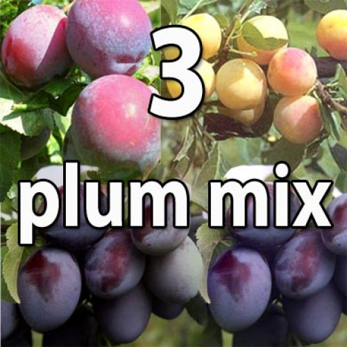 Victoria, Damson, Mirabelle Nancy Plum Trees Mix