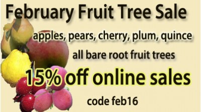 Super Fruit Sale for Febuary - 15% off Bare Root Fruit Trees!.