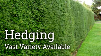 Hedges Are Planted To Serve Many Functions In The Garden. They Can Be Great  Sound