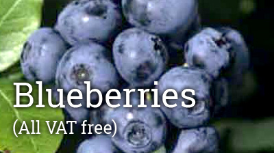 Rich in Antioxidants - Best Super Fruit for UK Gardens