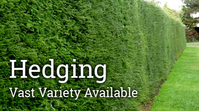 Hedges are planted to serve many functions in the garden. They can be great sound and pollution barriers, form boundaries, between properties, keep out unwanted visitors, and provide screening and privacy as well as a valuable habitat for wildlife.