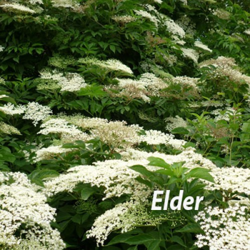 Wildlife Edible Hedging Mix