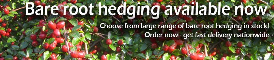 Order Your Bareroot and Rootball Hedging Plants Now