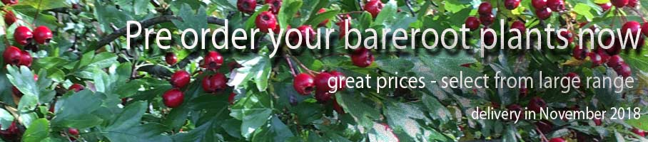 Pre Order Your Bareroot Hedging Plants & Fruits Now