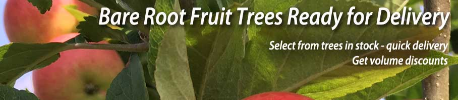 Bare Root Fruit Trees in Stock - Quick Delivery!
