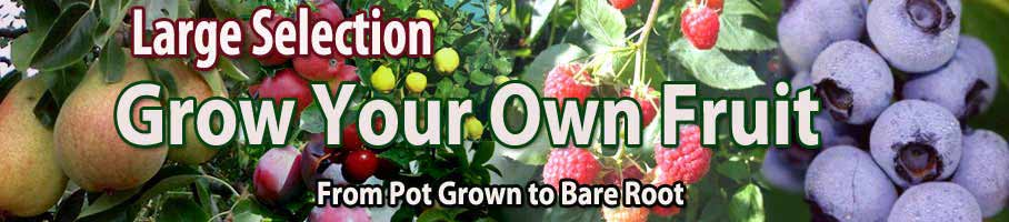 Fruit Trees, Blueberries, Raspberry Canes, Rhubarb - Great Prices!