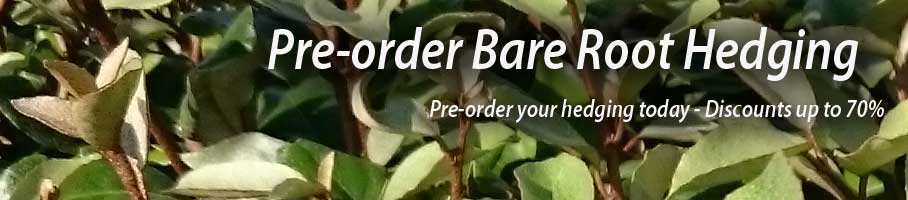Pre Order Your Bare Root Hedging Plants and Trees - 10% discount - coupon code- fall2016