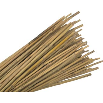 Bamboo Canes Gardening Advice